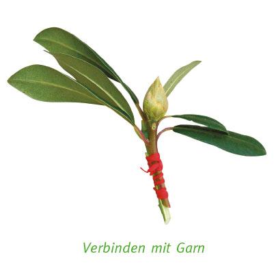 Pflanze Verbindung